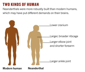 neanderthal-comparison