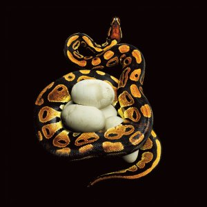 snake-grid-2-master675