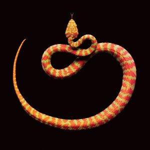 snake-grid-3-master675