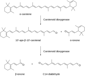 500px-Ionone_biosynthesis.svg