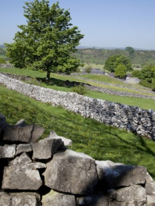 fell-frank-dry-stone-walls-hartington-peak-district-derbyshire-england-united-kingdom-europe