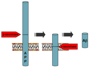 800px-APP_processing