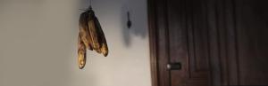 Banana+Header