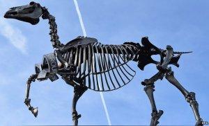 _81421770_horse-trot