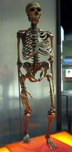 200px-Neanderthalensis