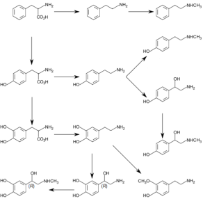 Catecholamine_and_trace_amine_biosynthesis