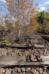 41984962-old-railway-railroad-railtrack-abandoned-destroyed-and-overgrown-wood