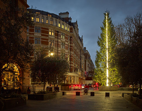 the-connaught-christmas-tree-2016.jpg